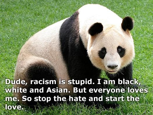 poprawność polityczn panda